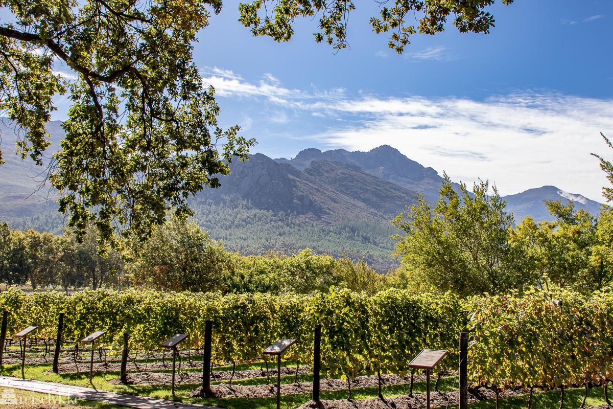Vinranker og fjellanskap Franschhoek