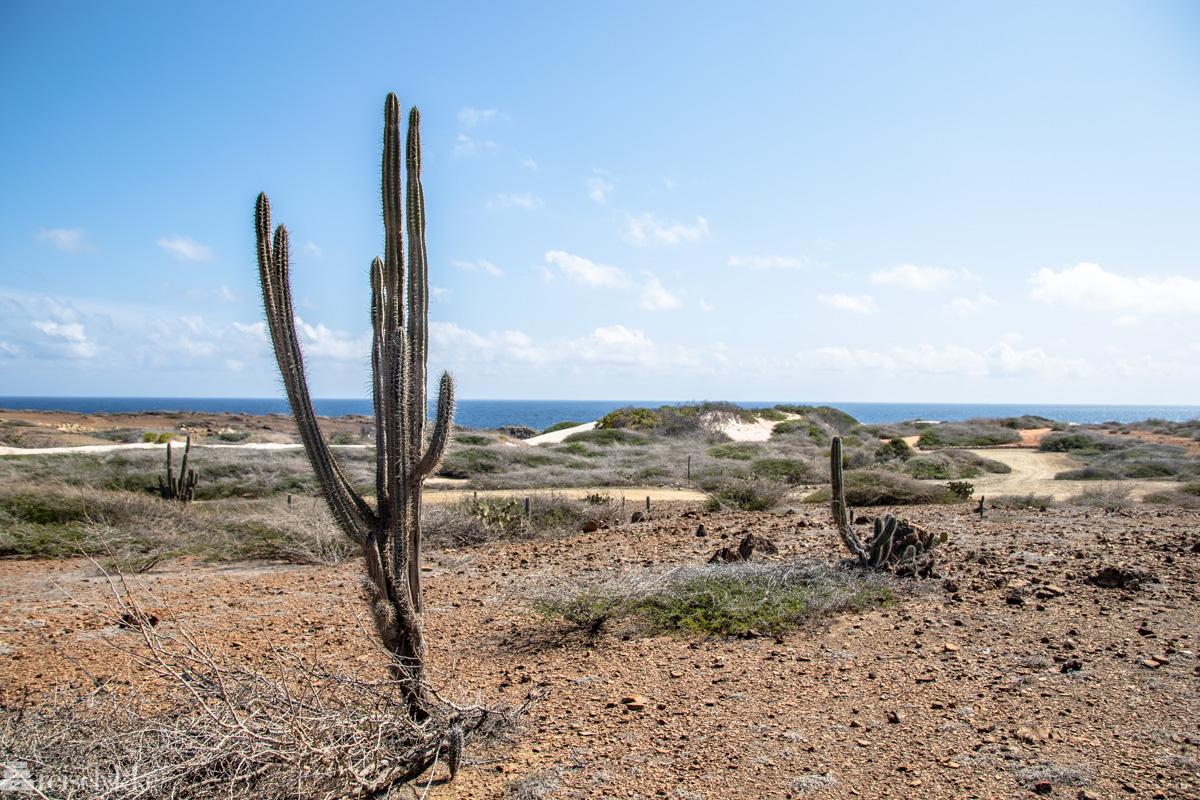 Ørkenlandskap Aruba