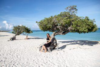 Divi trær Aruba