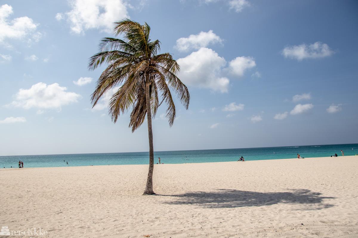 Lonely palm Aruba