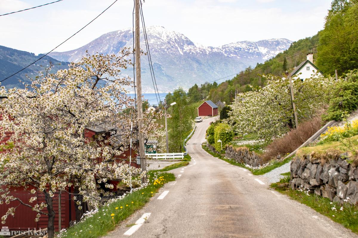Hardanger i Norge illustrerer artikkelen om Norgesferie