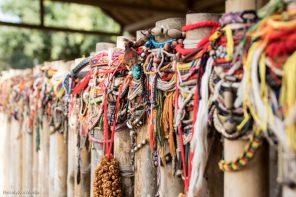 Bislettbanden_Kambodsja