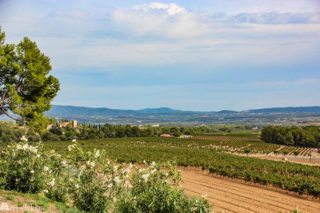En vinreise i Penedés