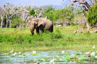 Sarari i Yala national park