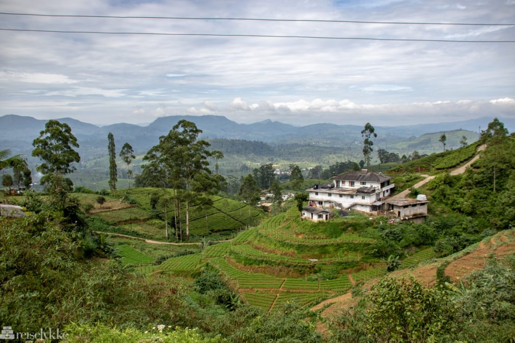 Teplantasje Nuwara Eliya Sri Lanka