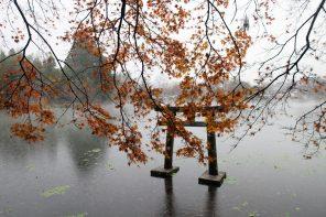 Høst i Kyushu, Japan