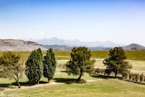 Vinproduksjon og vinsmaking i Montenegro