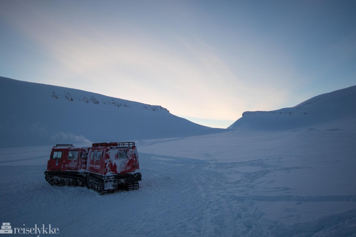 Beltebil på Svalbard