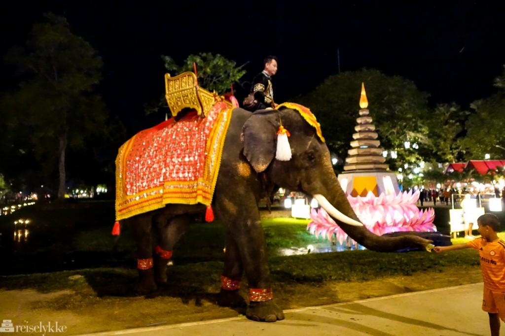 Elefanter i Thailand: Loy Krathong i Sukhothai