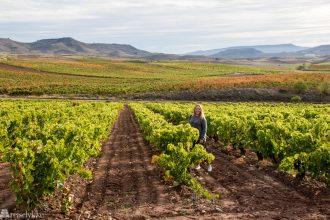 En reise i vin i Rioja