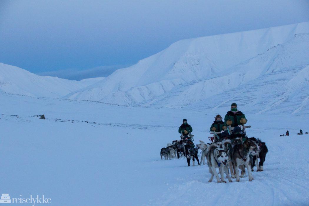 Hundespann på Svalbard