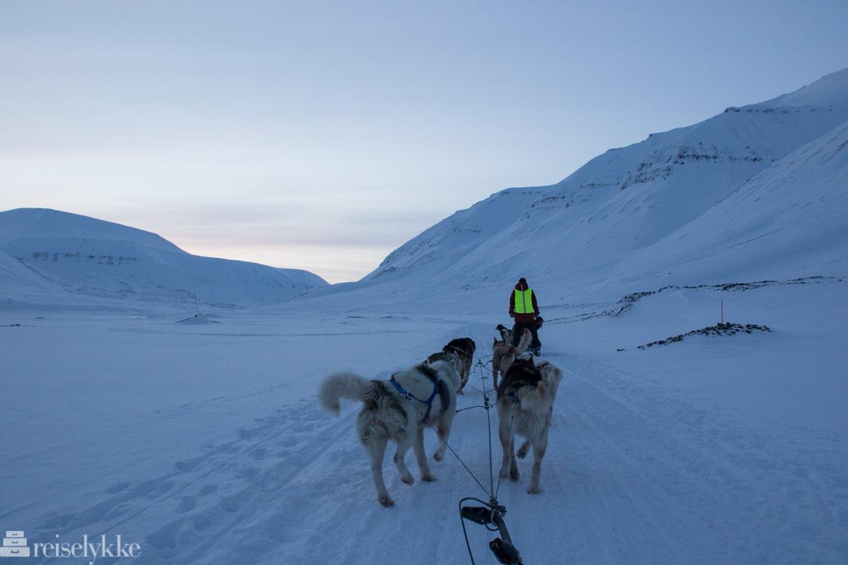 Hundesledekjøring, Svalbard 2