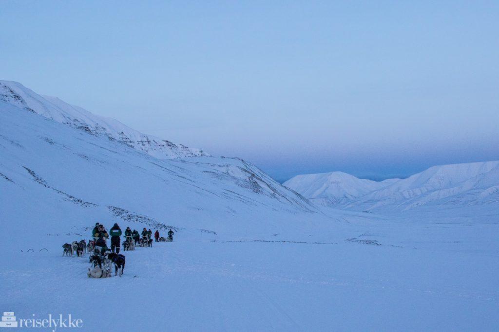 Hundesledekjøring, Svalbard 4