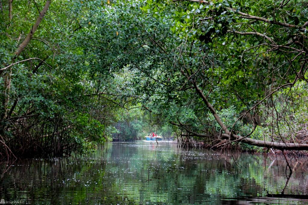 Caroni Swamp National Park, fuglejakt på trinidad