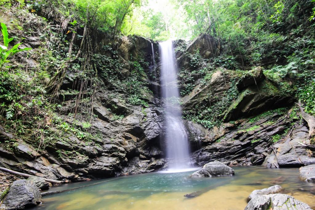 Avocat Waterfall, regnskogen, Trinidad
