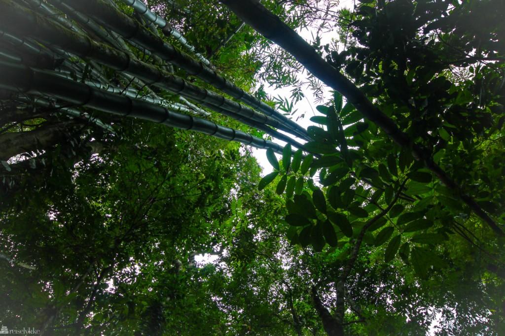 regnskogen på tobago