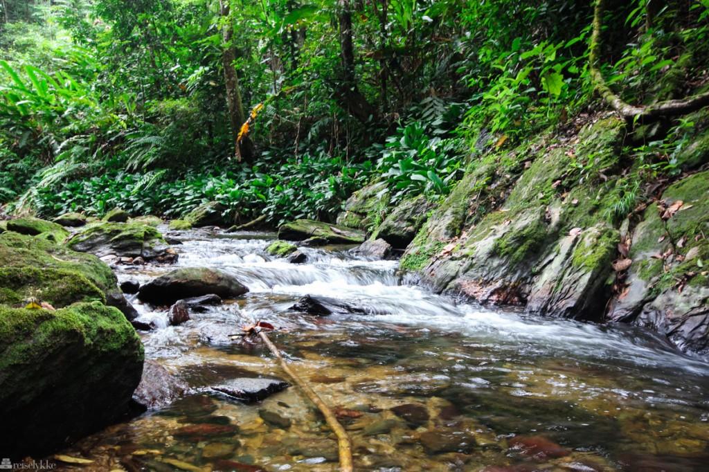 regnskogen på Trinidad