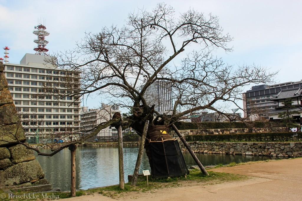Tre i Hiroshima som overlevde atombombe