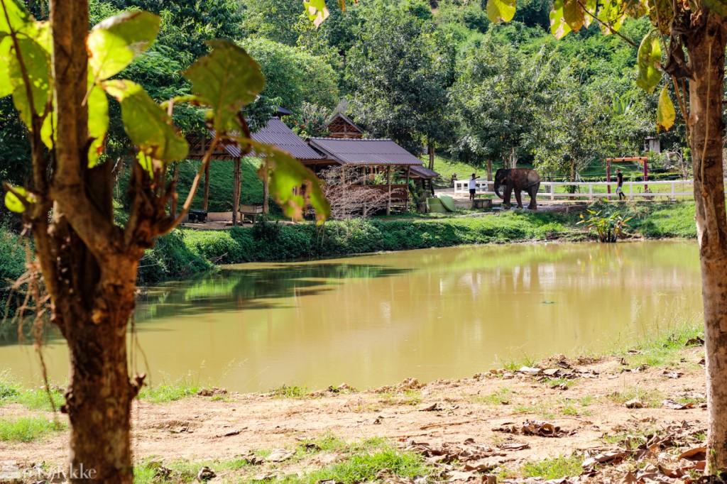 Elefanter i Thailand