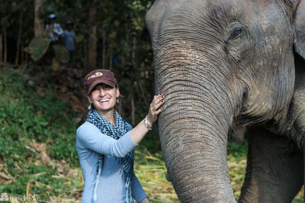 Elefanter i Thailand: Møte med Katherine Connor