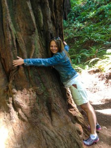 Muir Woods i California