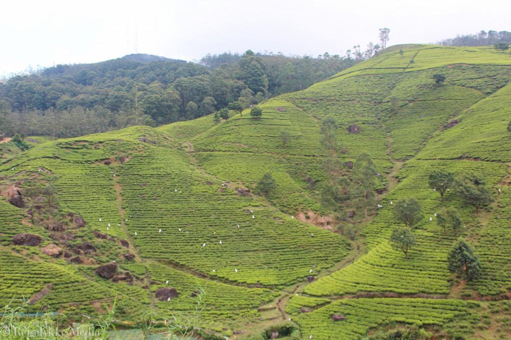 på reise i Sri Lanka
