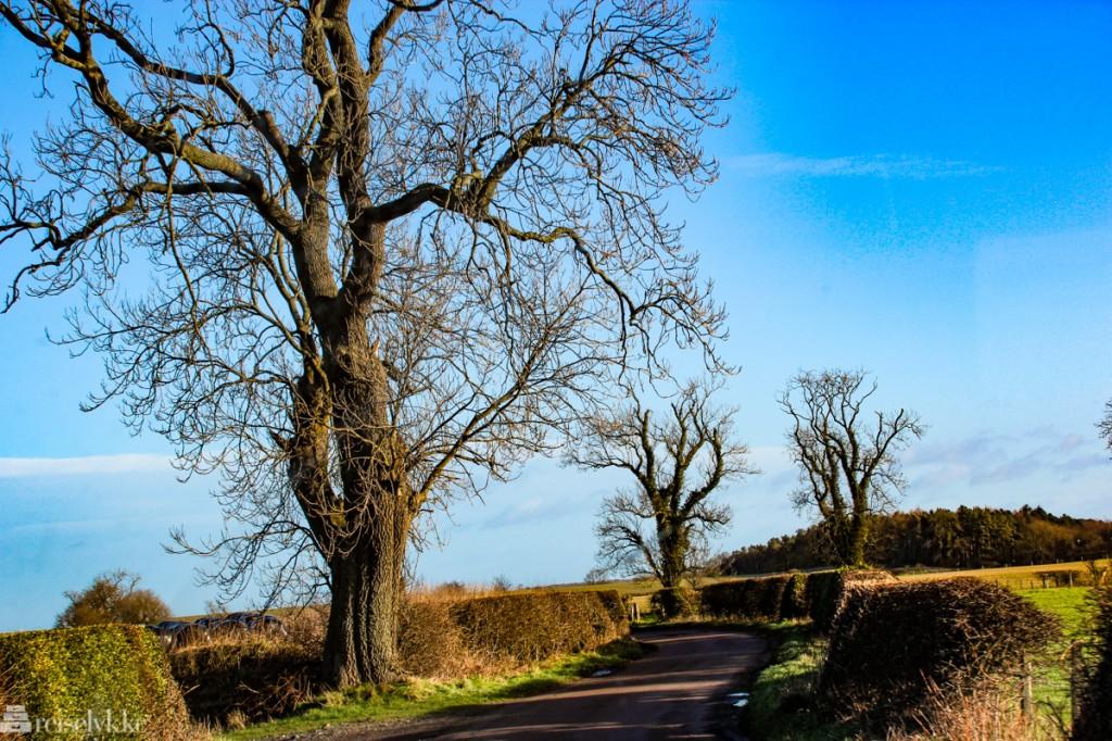 På jakt etter slott i Northumberland