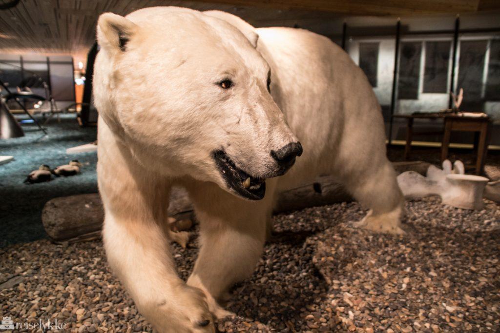 Isbjørn på Svalbard museum