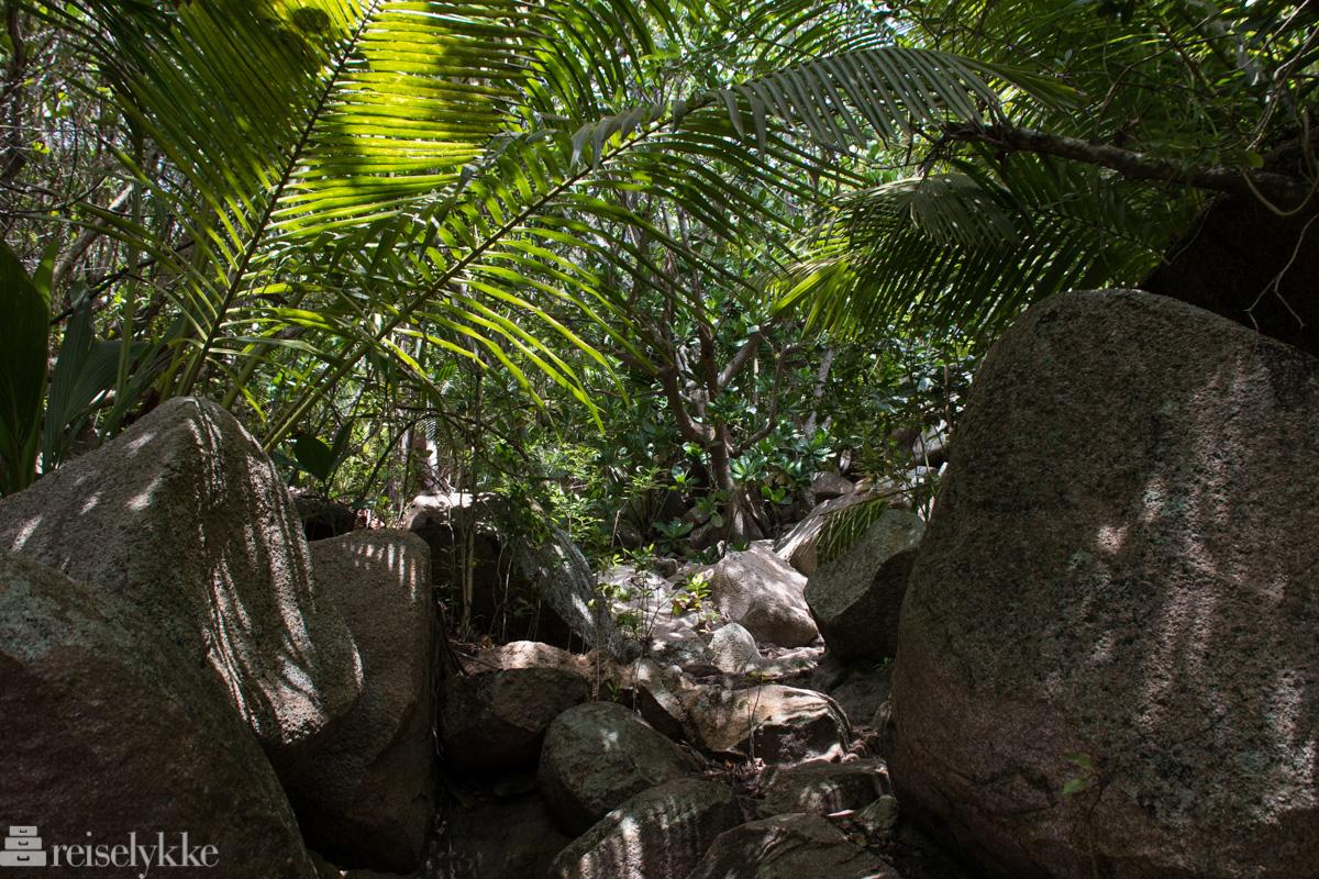 Jungel på La Digue Seychellene