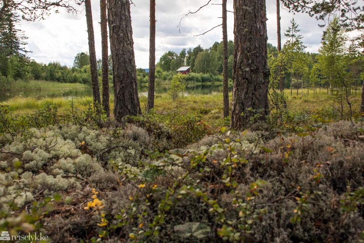 Kultur og skogsterreng i Värmland
