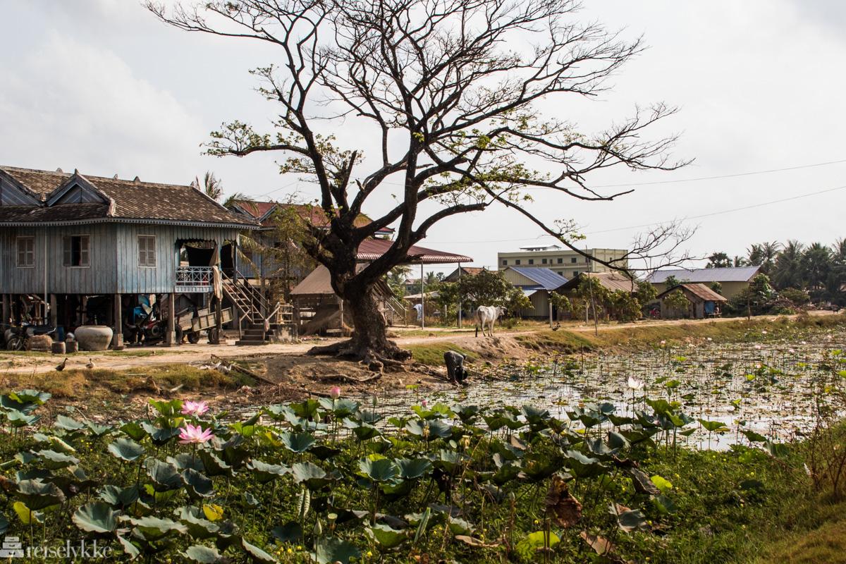 På landsbygda ved Kampot