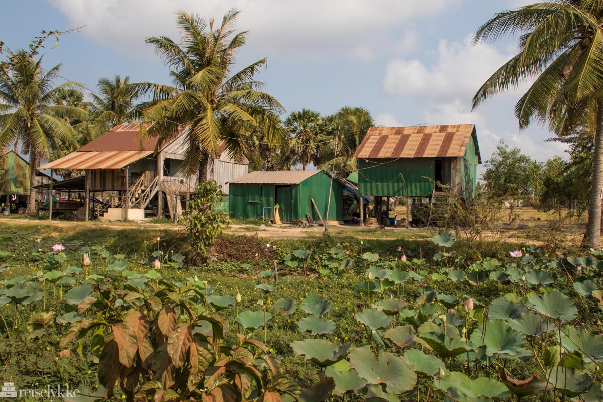 På landsbygda ved Kampot1