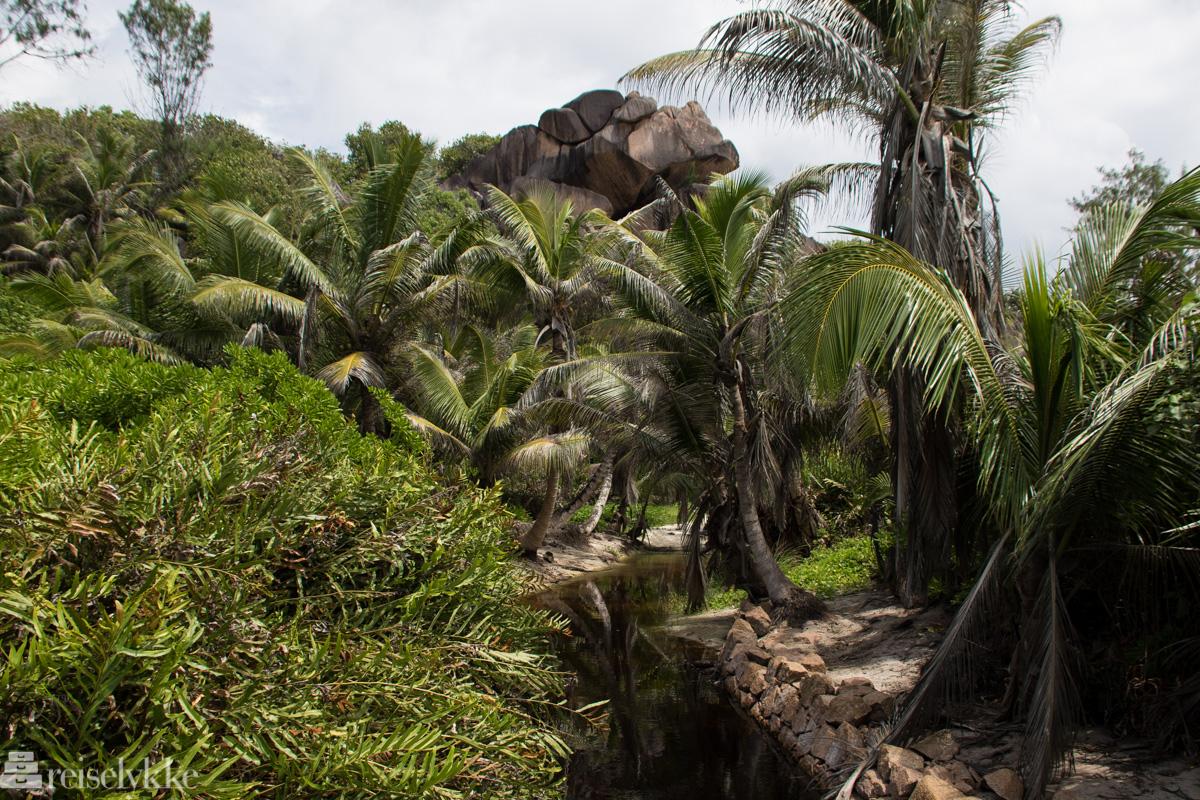 På vei til Petit Anse på La Digue, Seychellene