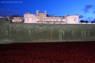 Poppies in London by Tower of London