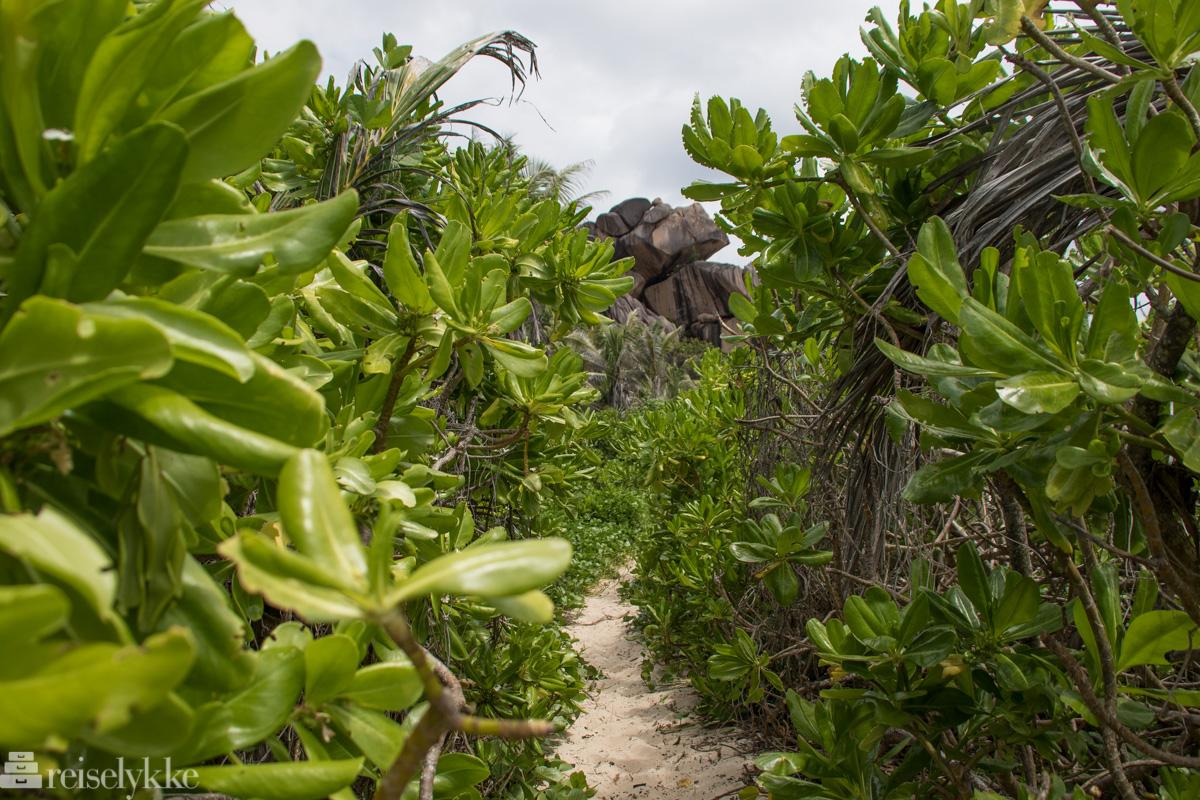 Sti til Petit Anse på La Digue, Seychellene