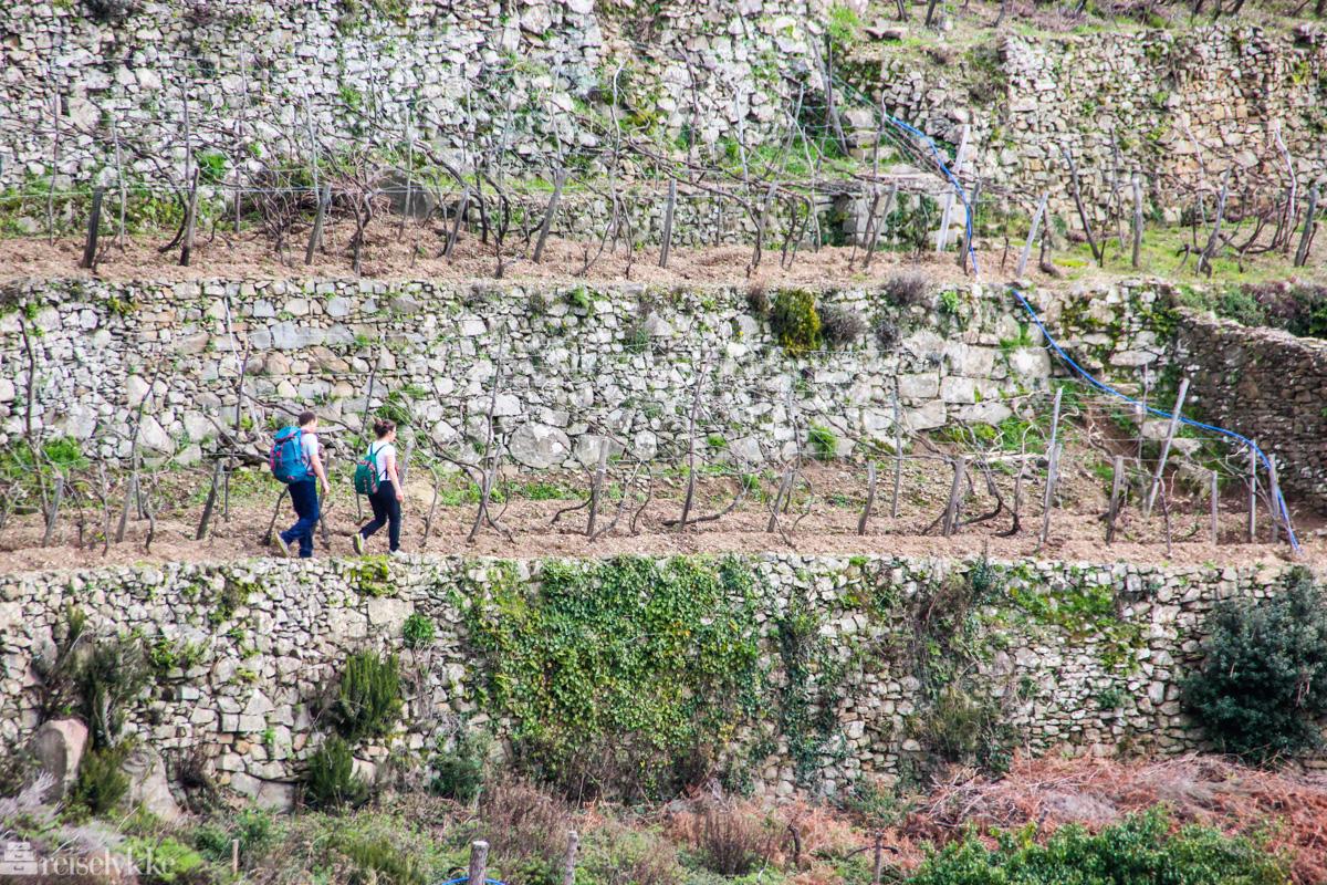 Vandretur i vinmarkene i Cinque Terre