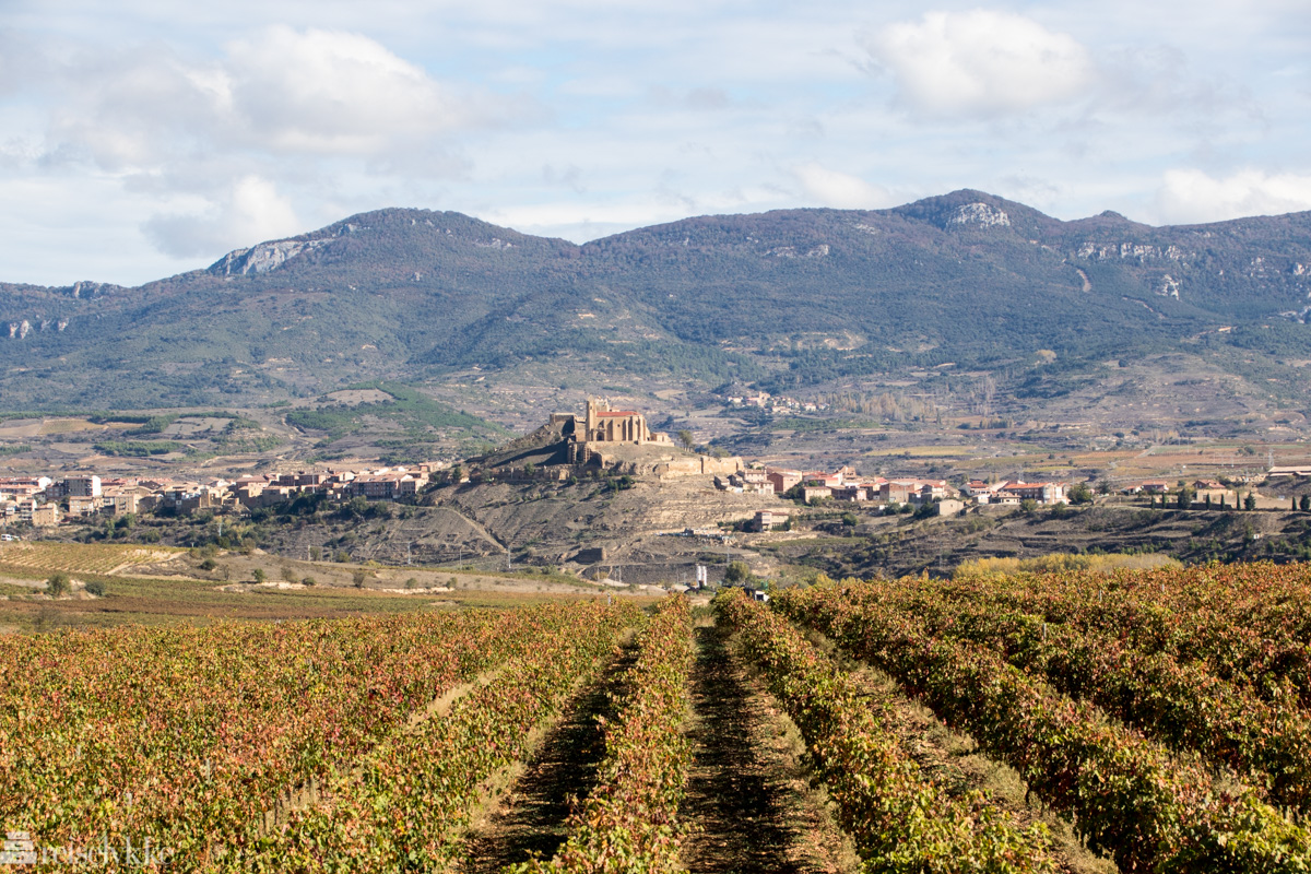 Ved Vivanco, La Rioja