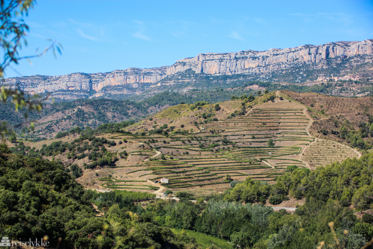 Vinmarker ved Serra de Montesant